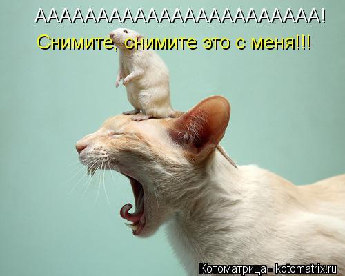 Котоматрица: ААААААААААААААААААААААА! Снимите, снимите это с меня!!!
