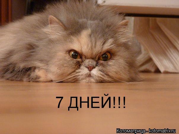 Котоматрица: 7 ДНЕЙ!!!