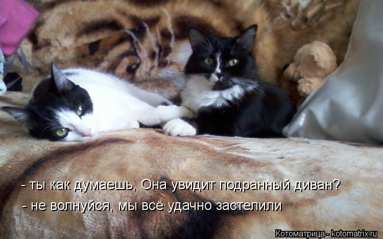 Котоматрица: - ты как думаешь, Она увидит подранный диван?  - не волнуйся, мы всё удачно застелили - не волнуйся, мы всё удачно застелили