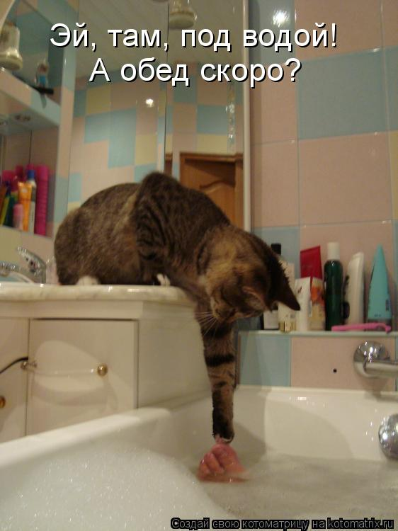 Котоматрица: Эй, там, под водой! А обед скоро?
