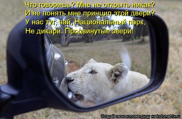 Котоматрица: Что говоришь? Мне не открыть никак? И не понять мне принцип этой двери? У нас тут, чай, Национальный парк, Не дикари. Продвинутые звери!