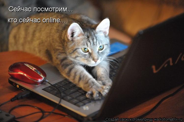 Котоматрица: Сейчас посмотрим... кто сейчас online...