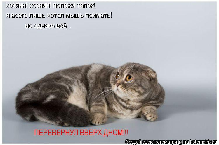 Котоматрица: хозяин! хозяин! положи тапок! я всего лишь хотел мышь поймать! но однако всё... ПЕРЕВЕРНУЛ ВВЕРХ ДНОМ!!!