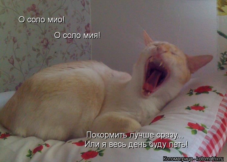 Котоматрица: О соло мио! О соло мия! Покормить лучше сразу... Или я весь день буду петь!