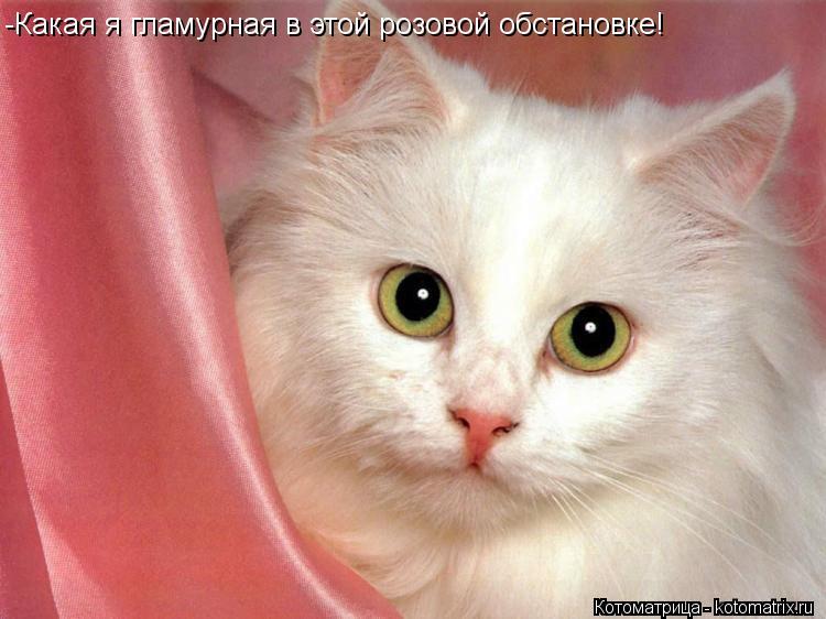 Котоматрица: -Какая я гламурная в этой розовой обстановке!