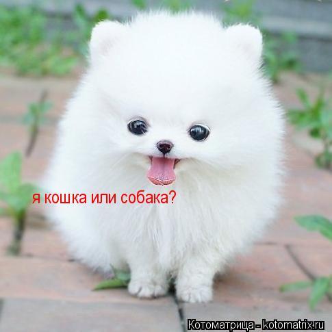 Котоматрица: я кошка или собака?