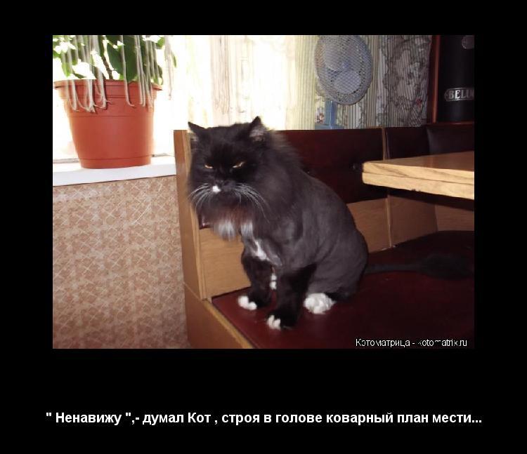 """Котоматрица: """" Теперь ты- Лев """",- сказали Люди """" Ненавижу """",- думал Кот , строя в голове коварный план мести..."""