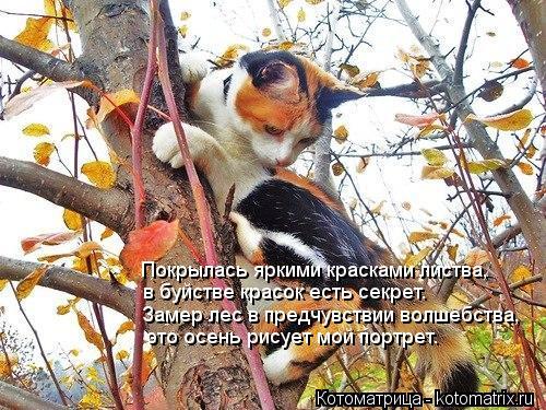 Котоматрица: Покрылась яркими красками листва, в буйстве красок есть секрет. Замер лес в предчувствии волшебства, это осень рисует мой портрет.