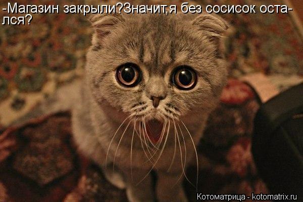 Котоматрица: -Магазин закрыли?Значит,я без сосисок оста- лся?