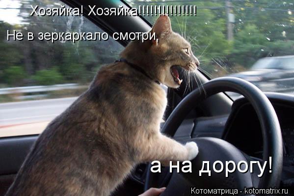 Котоматрица: Хозяйка! Хозяйка!!!!!!!!!!!!!!! Не в зеркаркало смотри, а на дорогу!