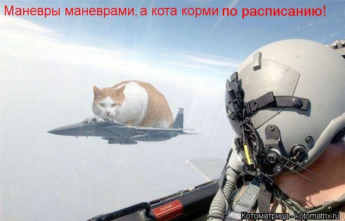 Котоматрица: Маневры маневрами,  а кота корми  по расписанию!