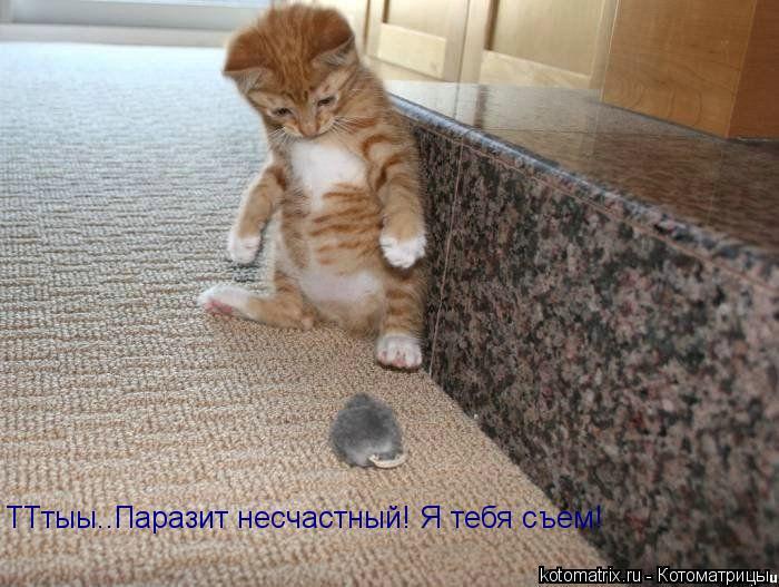 Котоматрица: ТТтыы..Паразит несчастный! Я тебя съем!