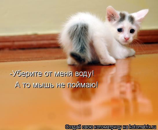 Котоматрица: -Уберите от меня воду!  А то мышь не поймаю!