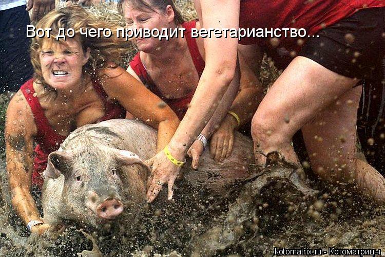 Котоматрица: Вот до чего приводит вегетарианство...