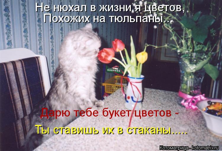 Котоматрица: Не нюхал в жизни я цветов,  Похожих на тюльпаны... Дарю тебе букет цветов -  Ты ставишь их в стаканы.....