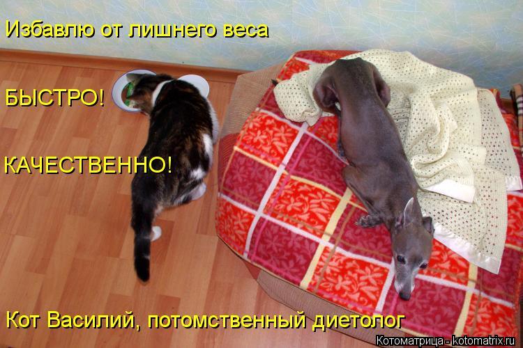 Котоматрица: Избавлю от лишнего веса БЫСТРО! КАЧЕСТВЕННО! Кот Василий, потомственный диетолог