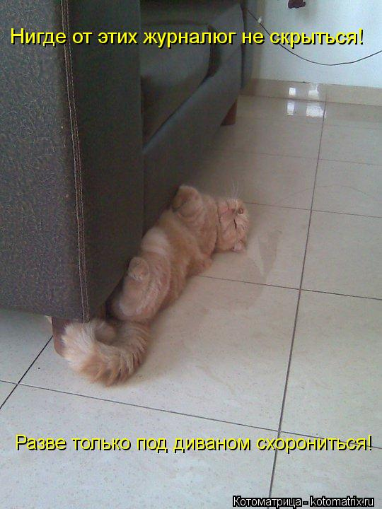 Котоматрица: Нигде от этих журналюг не скрыться! Разве только под диваном схорониться!