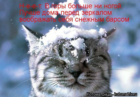 Котоматрица: Н-е-е-т. В горы больше ни ногой. Лучше дома перед зеркалом воображать себя снежным барсом