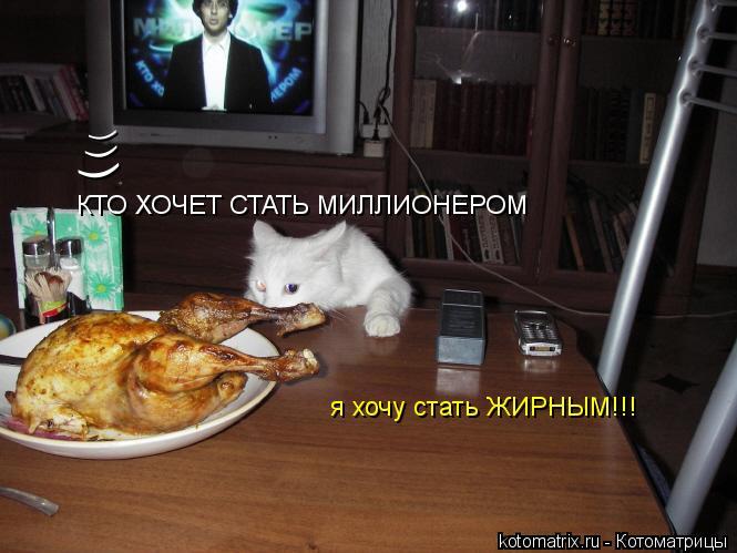 Котоматрица: ( ( ( КТО ХОЧЕТ СТАТЬ МИЛЛИОНЕРОМ я хочу стать ЖИРНЫМ!!!