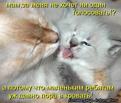 Котоматрица: мам,за меня не хочет ни один голосовать!? а потому что маленьким ребятам уж давно пора в кровать!