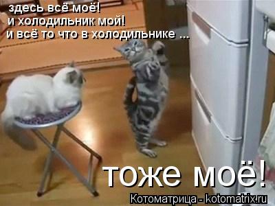 Котоматрица: здесь всё моё! и холодильник мой! и всё то что в холодильнике ... тоже моё!