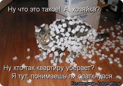 Котоматрица: Ну что это такое! А, хозяйка? Ну кто так квартиру уберает? Я тут, понимаешь ли спаткнулся...