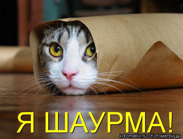 Котоматрица: Я ШАУРМА!