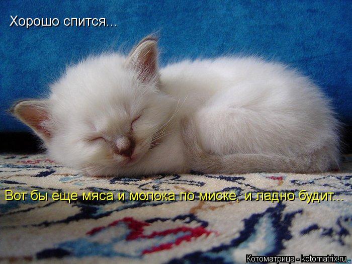 Котоматрица: Хорошо спится... Вот бы еще мяса и молока по миске, и ладно будит...