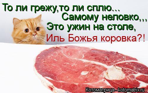 Котоматрица: То ли грежу,то ли сплю... Самому неловко,,, Это ужин на столе, Иль Божья коровка?!