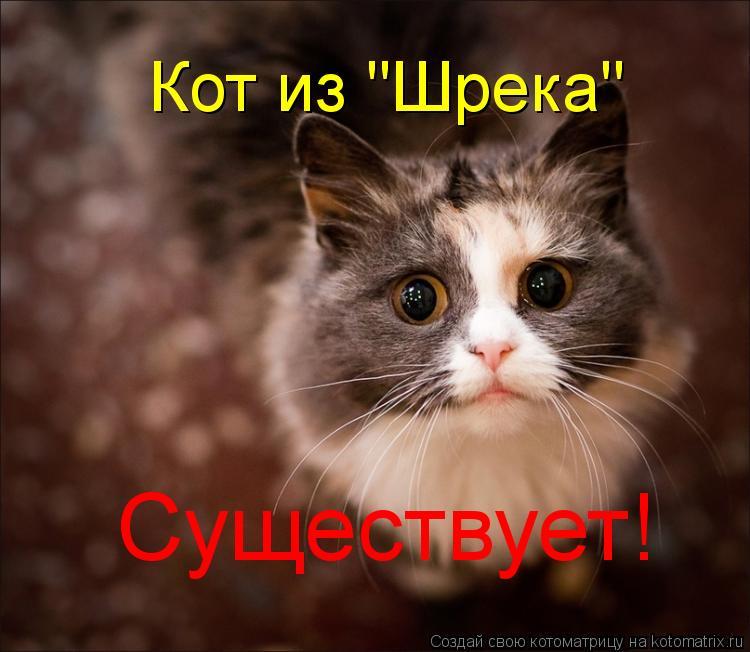 """Котоматрица: Кот из """"Шрека"""" Существует!"""