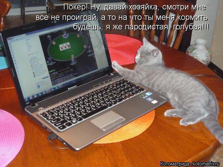 Котоматрица: Покер! Ну, давай хозяйка, смотри мне все не проиграй, а то на что ты меня кормить будешь, я же пародистая, голубая!!!