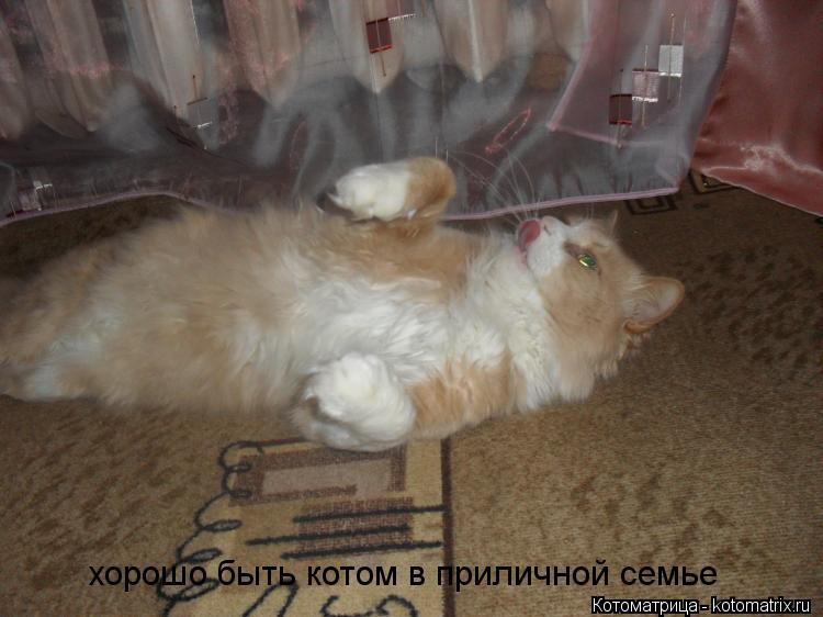 Котоматрица: хорошо быть котом в приличной семье
