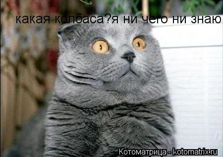 Котоматрица: какая колбаса?я ни чего ни знаю!