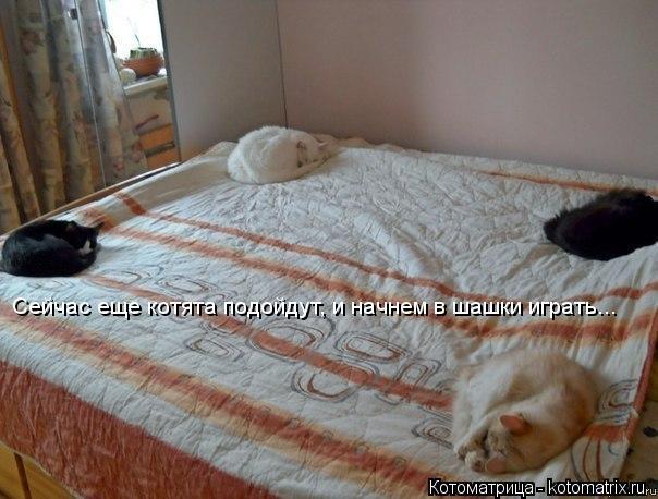 Котоматрица: Сейчас еще котята подойдут, и начнем в шашки играть...