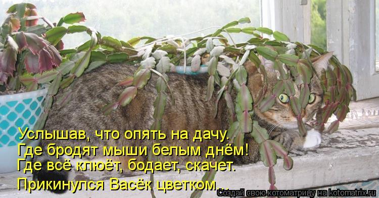 Котоматрица: Где всё клюёт, бодает, скачет. Прикинулся Васёк цветком... Где бродят мыши белым днём!  Услышав, что опять на дачу.