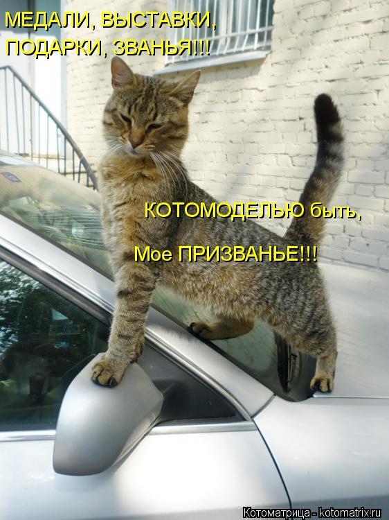 Котоматрица: МЕДАЛИ, ВЫСТАВКИ, ПОДАРКИ, ЗВАНЬЯ!!! КОТОМОДЕЛЬЮ быть, Мое ПРИЗВАНЬЕ!!!