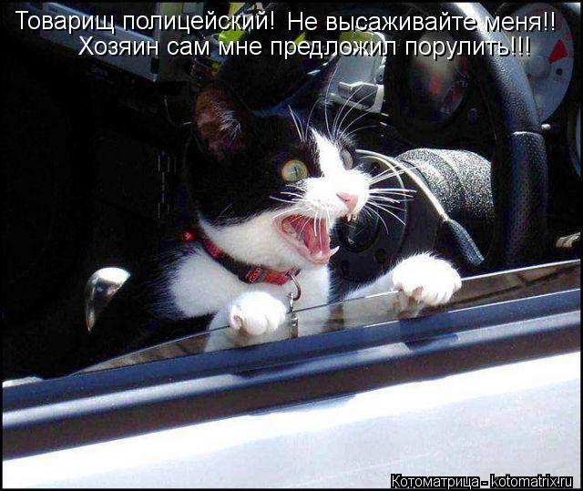Котоматрица: Товарищ полицейский!   Не высаживайте меня!! Хозяин сам мне предложил порулить!!!