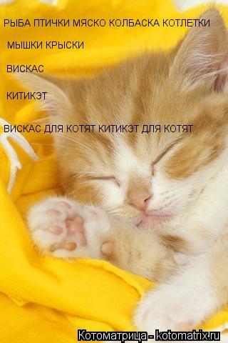Sleepy Cat скачать бесплатно, Картинки 240x320 Животные на телефон.