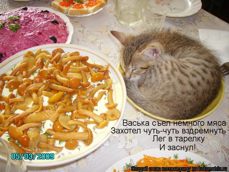 Котоматрица: Васька съел немного мяса Захотел чуть-чуть вздремнуть Лег в тарелку И заснул!