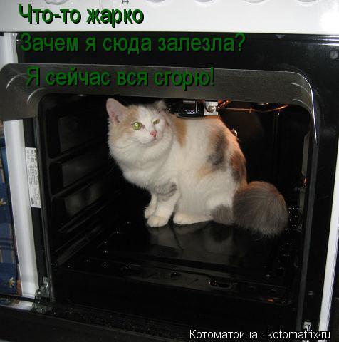 Котоматрица: Что-то жарко Зачем я сюда залезла? Я сейчас вся сгорю!