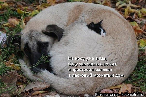 Котоматрица: На носу уже зима, буду зимовать с котом, я пристроил малыша в ласковый мохнатый дом.
