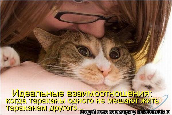 Котоматрица: Идеальные взаимоотношения: когда тараканы одного не мешают жить тараканам другого...