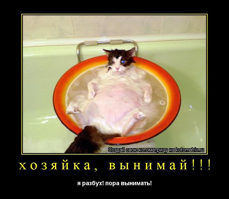 Котоматрица: хозяйка, вынимай!!! я разбух! пора вынимать!