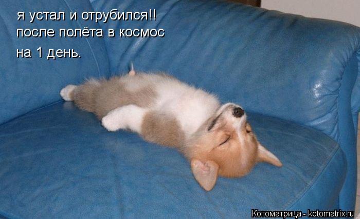 Котоматрица: я устал и отрубился!! после полёта в космос на 1 день.