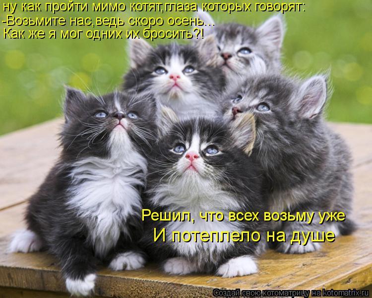 Котоматрица: ну как пройти мимо котят,глаза которых говорят: -Возьмите нас,ведь скоро осень... Как же я мог одних их бросить?! Решил, что всех возьму уже И п
