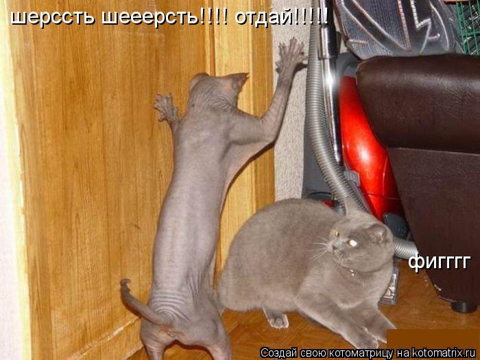 Котоматрица: шерссть шееерсть!!!! отдай!!!!! фигггг