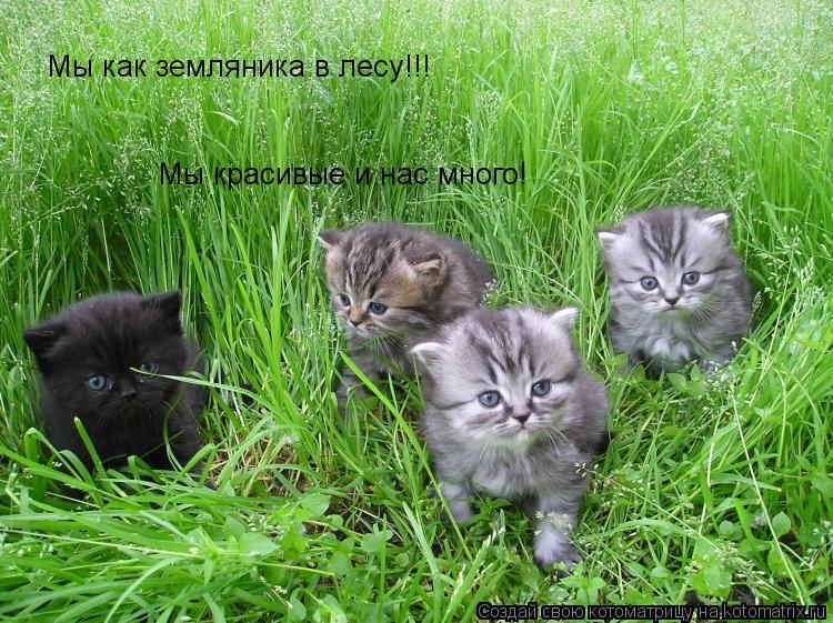 Котоматрица: Мы как земляника в лесу!!! Мы красивые и нас много!