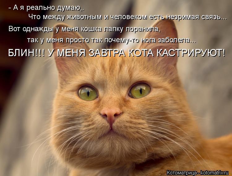 Котоматрица: - А я реально думаю,.   Что между животным и человеком есть незримая связь... Вот однажды у меня кошка лапку поранила,  так у меня просто так поч