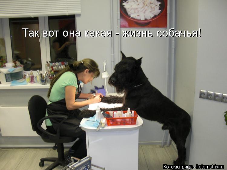 Котоматрица: Так вот она какая - жизнь собачья! Так вот она какая - жизнь собачья!