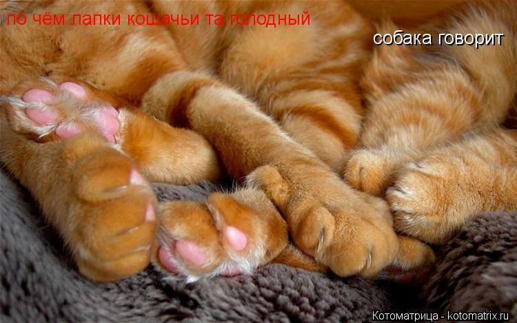 Котоматрица: собака говорит по чём лапки кошачьи та голодный